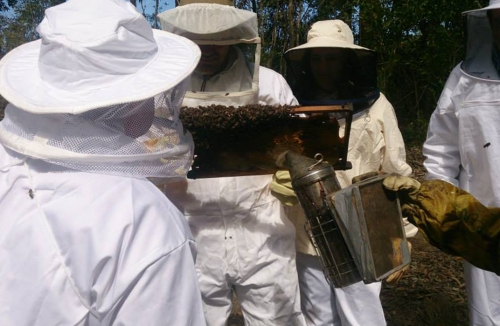 Bees at Honeywood Farm